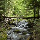 Logs over River by ElizabethReneeP