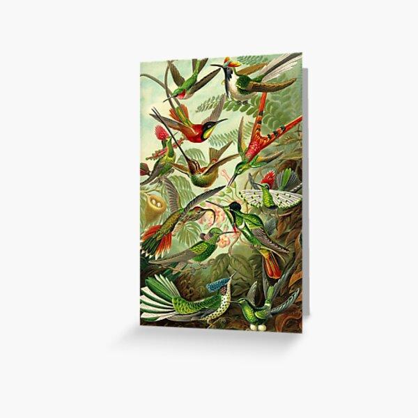 Colibri - Ernst Haeckel Greeting Card