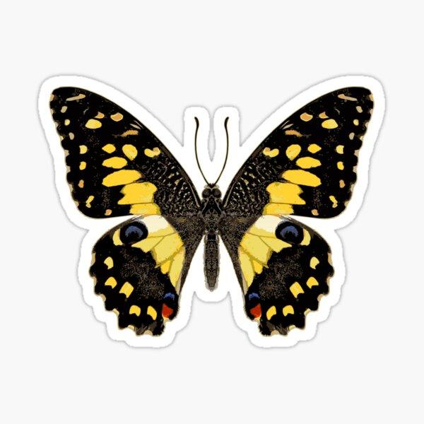 Lime Butterfly Sticker