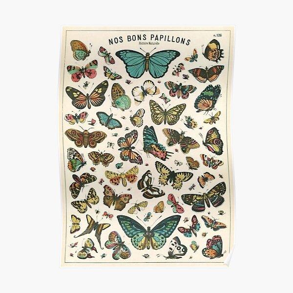 cartel de mariposa vintage Póster