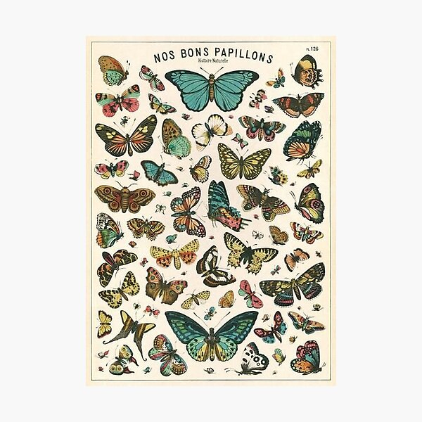 vintage butterfly poster Photographic Print