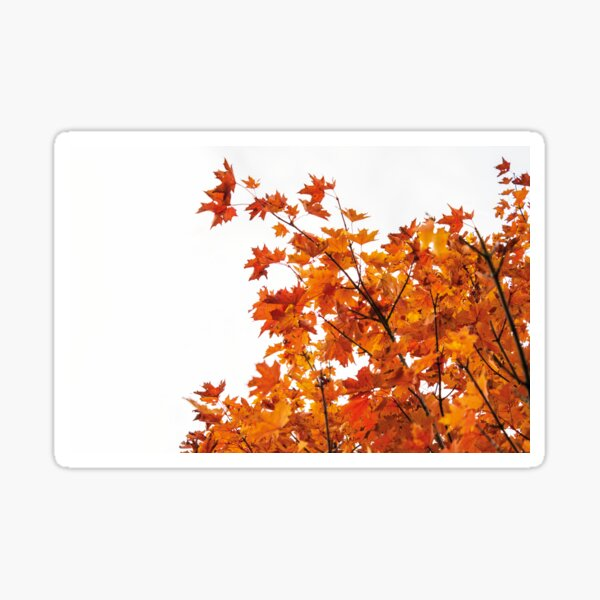 Vibrant Orange Autumn Leaves  Sticker