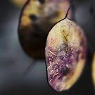 Seed Pods by Karen E Camilleri