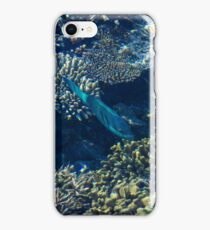 Tropical fishes in the Maldives, Laccadivian Sea iPhone Case/Skin