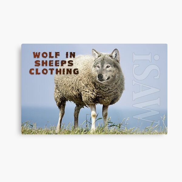 Wolf In Sheeps Clothing Metal Print
