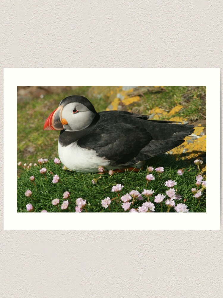 Alternate view of Puffin in the pinks Art Print