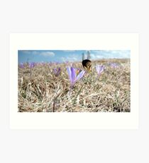 Bumble-bee above saffron meadow Art Print