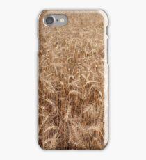 Golden grain field iPhone Case/Skin
