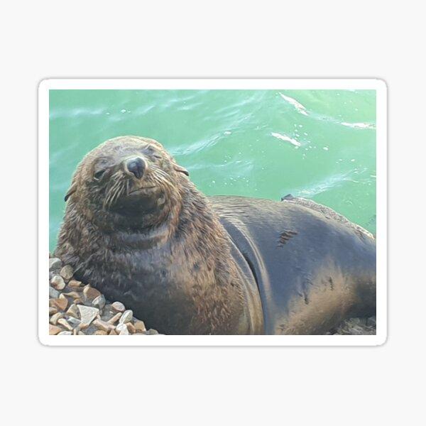 Sleepy Seal Sticker