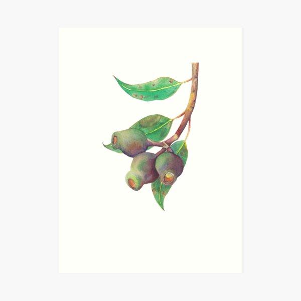 Eucalyptus tree branch with gumnuts watercolour Art Print