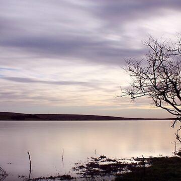 Einsamer Baum am Colliford See von Andrew-Hocking