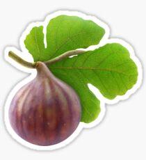 Fresh fig on a branch Sticker