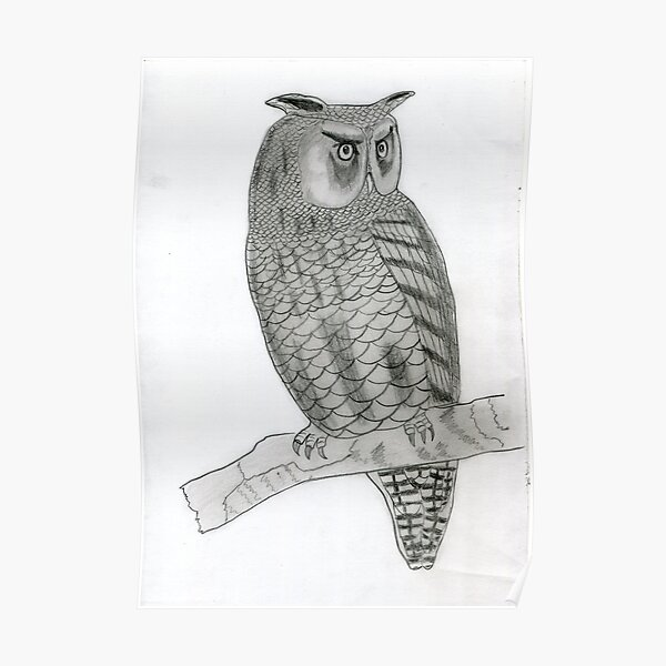 Realistic Owl Drawing Art -- Owl Graphite Pencil Poster