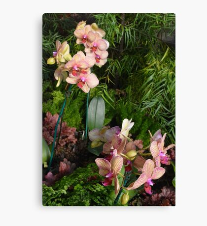 Orchids at The Phipps Conservatory Pittsburgh Canvas Print