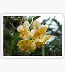 Yellow Orchids Sticker