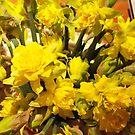 ...it's almost Spring! daffodils..2000 VISUALIZZAZ. GIUGNO  2013-VETRINA RB EXPLORE 17 MARZO 2012 ---- by Guendalyn