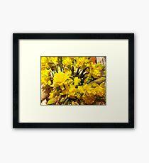 ...it's almost Spring! daffodils..2000 VISUALIZZAZ. GIUGNO  2013-VETRINA RB EXPLORE 17 MARZO 2012 ---- Framed Print