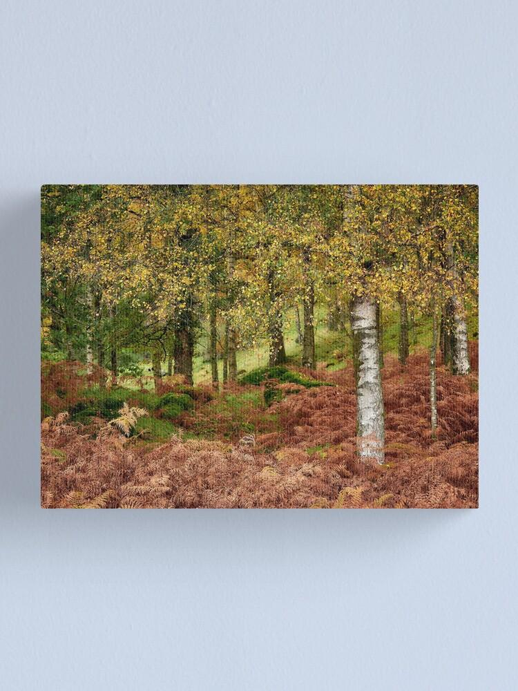 Alternate view of Rusland Birch - Autumn colours Canvas Print