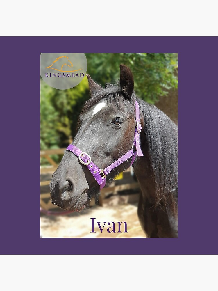 Ivan's Collection by KingsmeadHorses