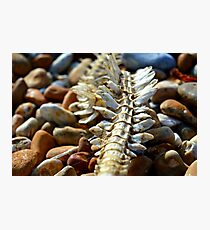 Spine Photographic Print