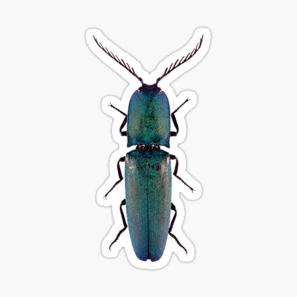Blue Click Beetle (Chalcolepidius smaragdinus) Sticker