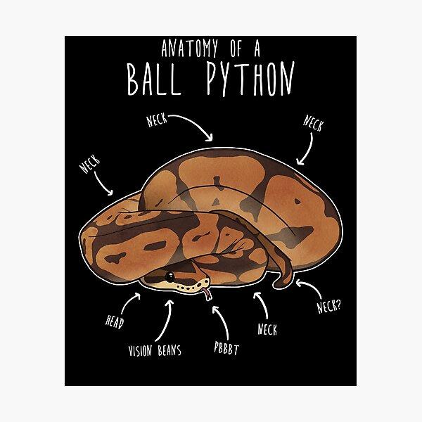 Anatomy of a Ball Python Photographic Print