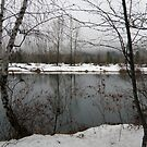Cold and Quiet by Patty Boyte