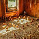 Baby Chicks by Mary Carol Story