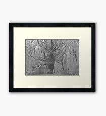 First Snows Framed Print