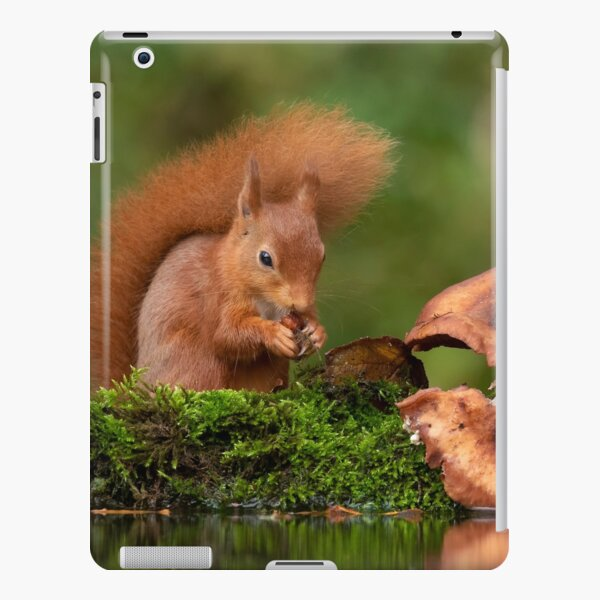 Red Squirrel and mushrooms iPad Snap Case