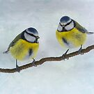 Blue Tits by M S Photography/Art