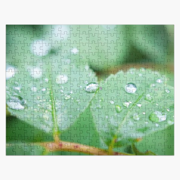 After the rainfall Jigsaw Puzzle