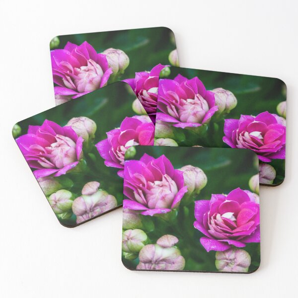 Bright Pink Flowers Coasters (Set of 4)