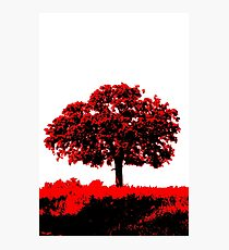 Lone Oak - Black White And Red Series Photographic Print