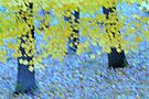 Autumn impressionism #2 by Laurie Minor