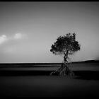 The Mangrove Tree in Black & White........Cape Trib by Imi Koetz