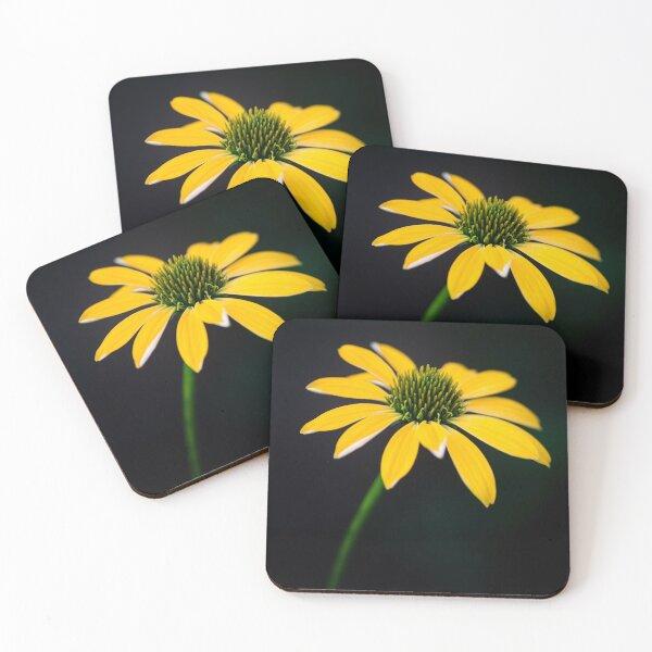 Gelbe Kegelblume auf einem dunklen Hintergrund Untersetzer (4er Set)