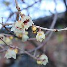 Yellow pale. by tempuros