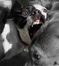 Dogs with game face on .2 by Alex Preiss