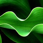 Curves of a Tulip Leaf  by clizzio