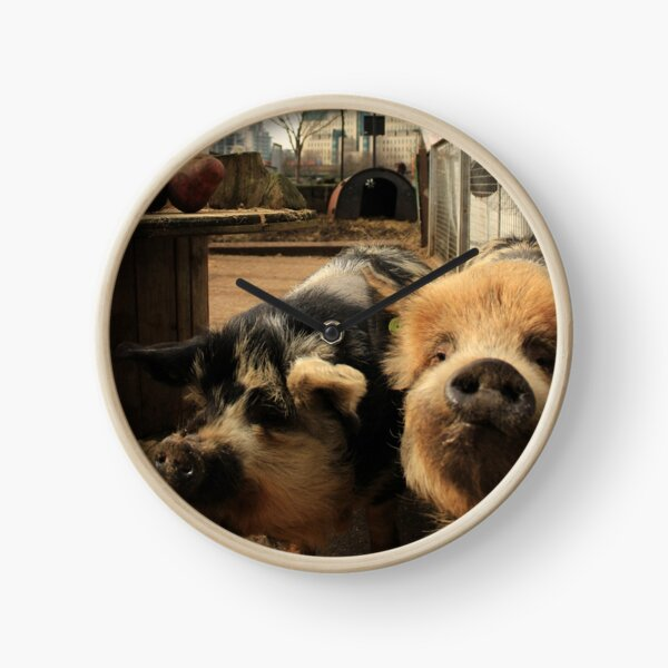 Vauxhall City Farm - Pigs (Jenny & Edward) Clock