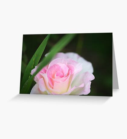 Seduced by a Rose Greeting Card