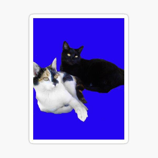 2 kitties on blue Sticker