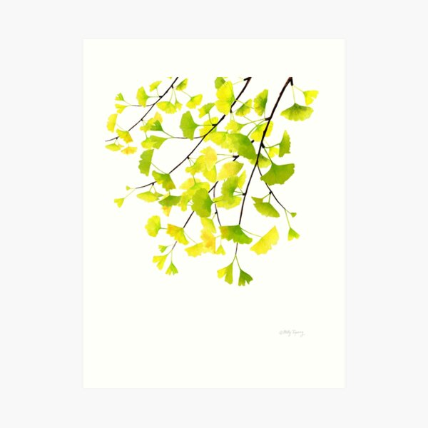 Ginkgo Branches Watercolor  Art Print