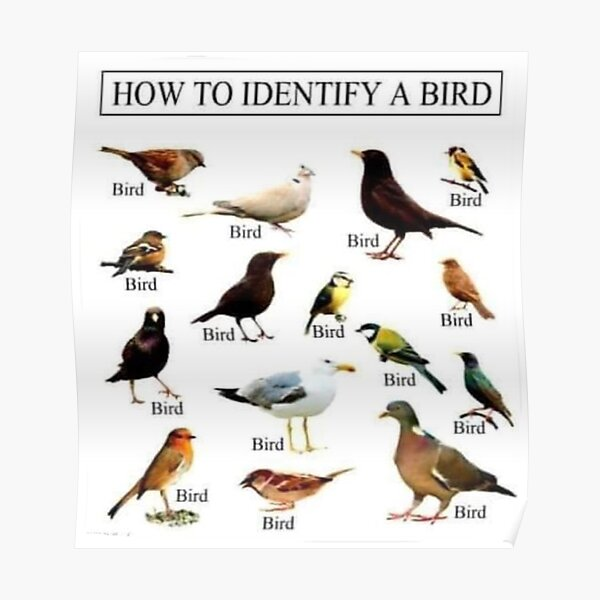 How To Identify A Bird Poster
