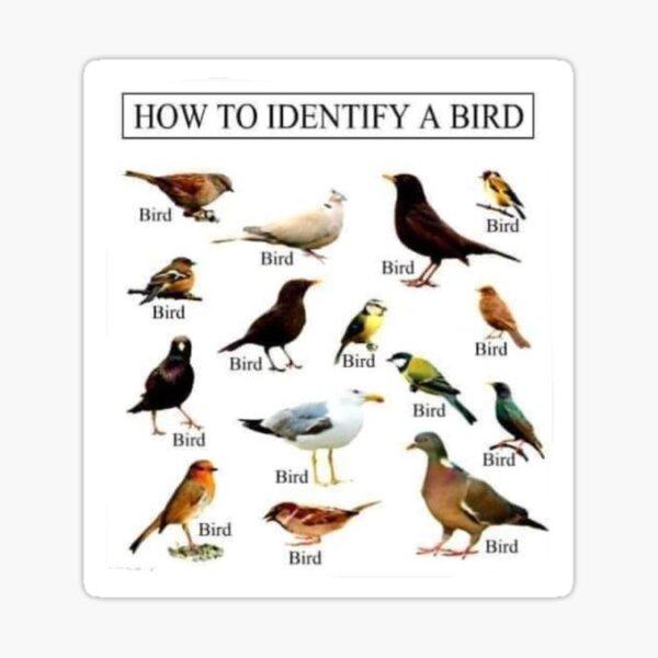 How To Identify A Bird Sticker