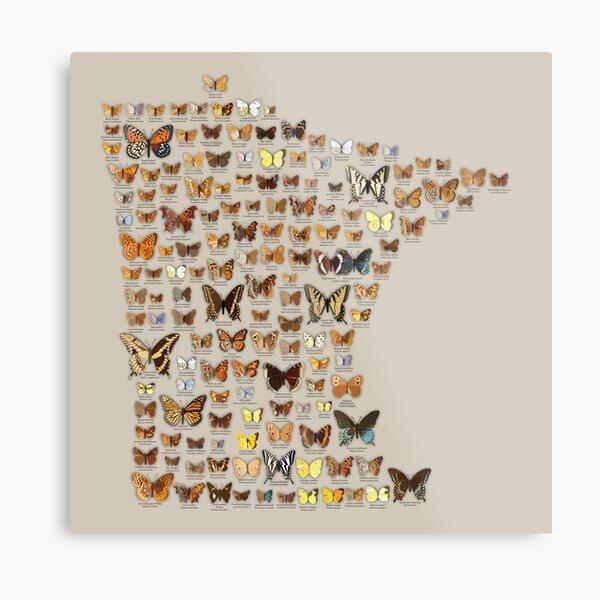 Butterflies of Minnesota Metal Print