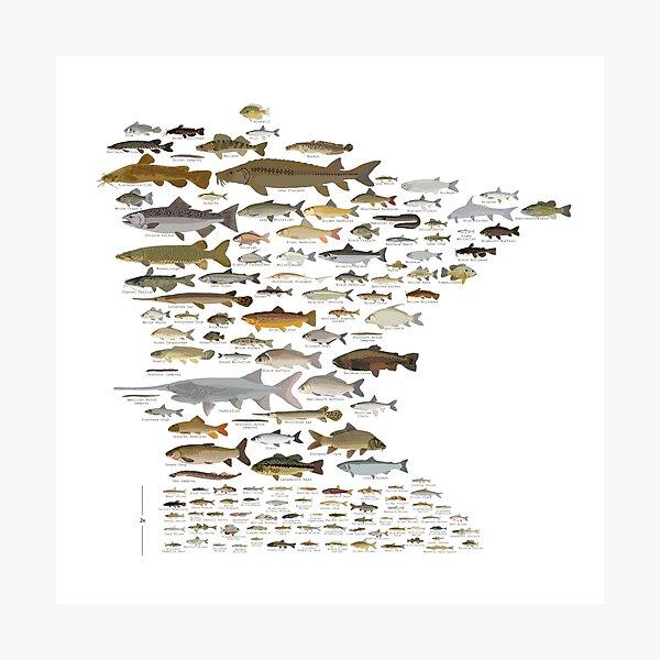Fishes of Minnesota Photographic Print