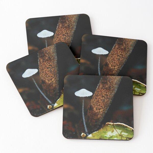 Tiny Mushroom Coasters (Set of 4)