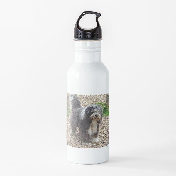 Bearded Collie Beachcombing - Beardie on the Beach Water Bottle